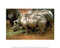 Black Rhinoceros in Africa Fine-Art Print