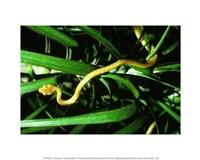 Brown Tree Snake Fine-Art Print