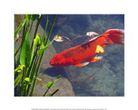 Red Goldfish Fine-Art Print