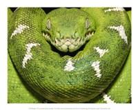 The Green Boa Snake Fine-Art Print