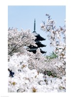 Cherry Blossom trees, Kyoto, Honshu, Japan Fine-Art Print