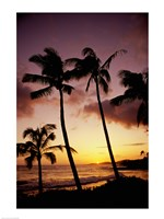 Silhouette of palm trees at sunset, Kauai, Hawaii, USA Fine-Art Print