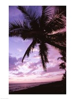 Kauai Hawaii USA Palm Tree Fine-Art Print