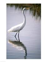 Egret In River Fine-Art Print