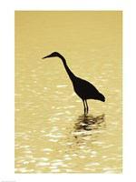 Great Egret in the water Fine-Art Print