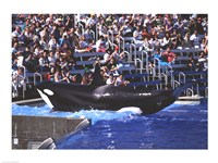 Killer Whale Sea World San Diego California USA Fine-Art Print