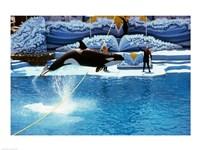 Shamu-Killer Whale Sea World San Diego California USA Fine-Art Print