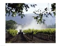 Tractor in a field, Napa Valley, California, USA Fine-Art Print