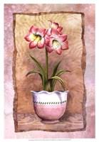 Spring Amaryllis Fine-Art Print