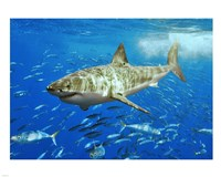 White Shark Fine-Art Print