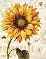 Under the Sun I Fine-Art Print