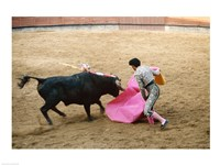 Matador fighting a bull, Plaza de Toros, Ronda, Spain Fine-Art Print