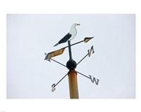 Seagull Weathervane Fine-Art Print