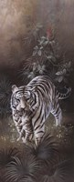 White Tigers Fine-Art Print