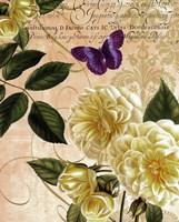 Golden Roses Fine-Art Print