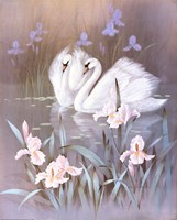 Swans With Waterlilies Fine-Art Print