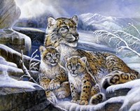 Snow Leopards Fine-Art Print
