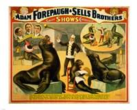 Circus Seals Fine-Art Print