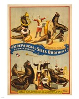 Sells Brothers Sea Lion Circus Fine-Art Print
