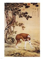 Ten Prized Dogs Chinese Greyhound Fine-Art Print