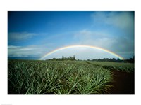 Makawao, Rainbow over farm, USA, Hawaii Fine-Art Print