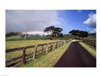Rainbow over pineapple fields, Makawao, Maui, Hawaii, USA Fine-Art Print