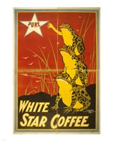 White Star Coffee Frogs Fine-Art Print