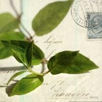 Vine Leaf Fine-Art Print