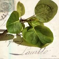 Apple Leaf Fine-Art Print