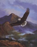 Eagle Gliding Fine-Art Print