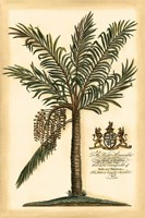 British Colonial Palm II Fine-Art Print