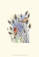 House Finches Fine-Art Print