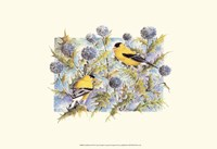 Goldfinches Fine-Art Print