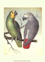 Parrots II Fine-Art Print