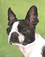 Dog Portrait-Boston Fine-Art Print