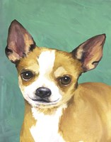 Dog Portrait-Chihuahua Fine-Art Print