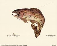 Brown Trout Fine-Art Print