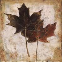 Natural Leaves IV Fine-Art Print