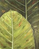 Green Zoom II Fine-Art Print