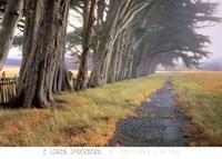 Eucalyptus Fog Fine-Art Print