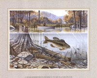 Trout Under Water Fine-Art Print