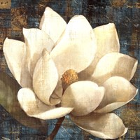 Magnolia Blossom Turquoise Fine-Art Print