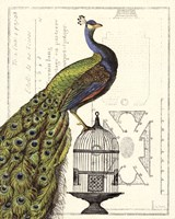 Peacock Birdcage I Fine-Art Print