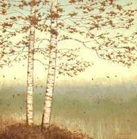 Golden Birch I with Blue Sky Fine-Art Print
