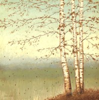 Golden Birch II with Blue Sky Fine-Art Print
