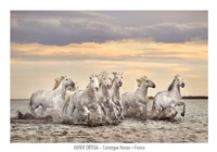 Camargue Horses - France Fine-Art Print