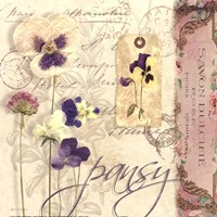 Pansy Fine-Art Print