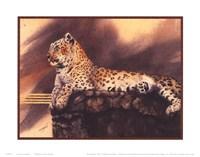 Lounging Leopard Fine-Art Print