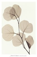 EUCALYPTUS LEAVES Fine-Art Print