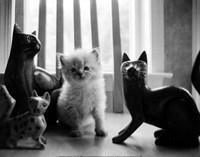 Ragdoll Kitten Fine-Art Print